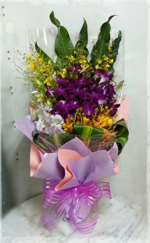 HB86b Orchids