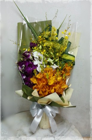 HB86a Orchids